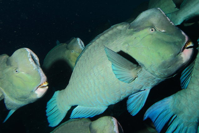 Diving in Malaysia, Palau Sipadan Marine Reserve - By Mikel Hendriks